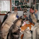husky_party
