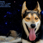 orion_wp